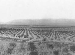 Penrose Orchard
