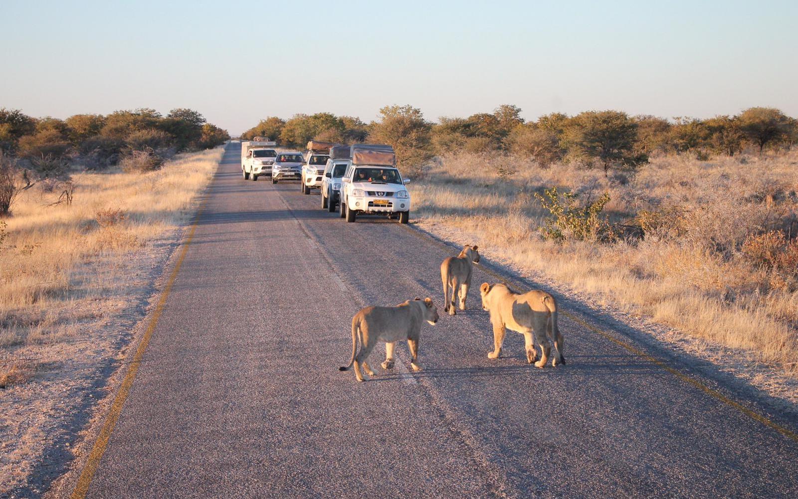 Botswana - Simbabwe - Namibia - Südafrika