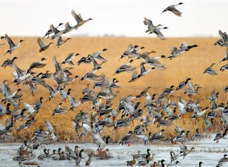 Early-Season Destinations: Four Prairie Waterfowling Hotspots