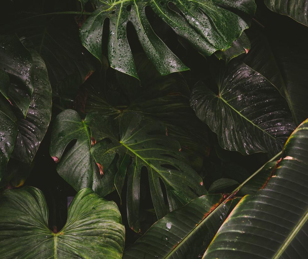 green forest johannes hofmann.jpg