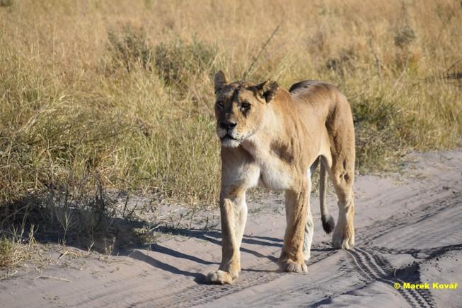 Datování safari 2015