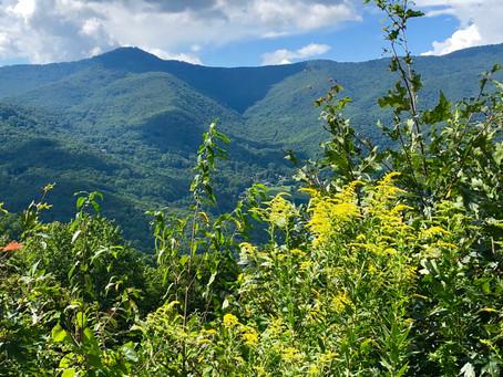 17 Smokey Mountain Photos to Inspire You to Plan a Trip