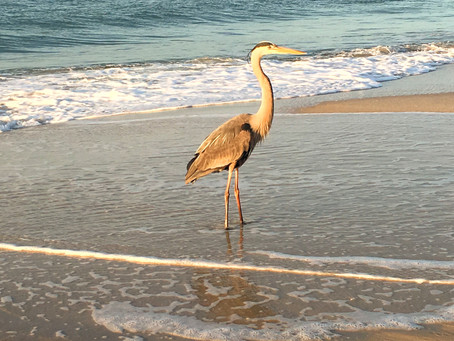 19 Gulf Coast Photos to Inspire Your Next Vacation