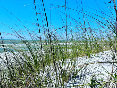 Exploring the Coastal Wetlands on the Hike/Bike Trails of Gulf State Park, in Gulf Shores Alabama