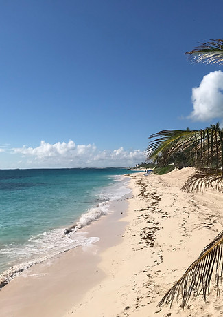 Abacos