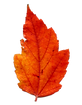 188-1881611_transparent-fall-background-png-real-transparent-background-autumn_clipped_rev