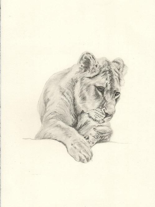 Drawing Workshop 1 (Lion) 11th September 2021