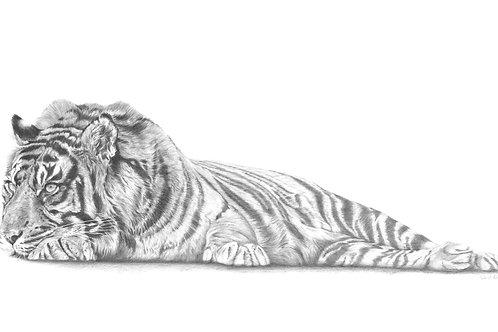 Arresting Tiger (97cm x 42cm) Original Size