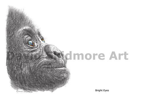 BRIGHT EYES (baby Gorilla)