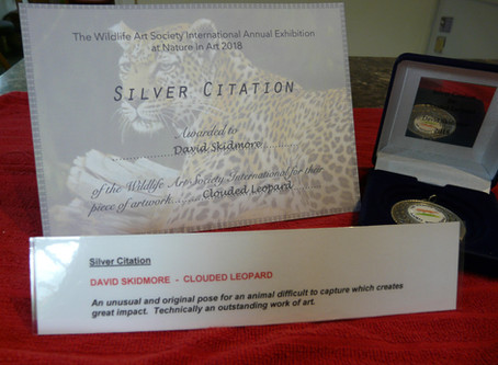 Clouded Leopard Drawing wins award