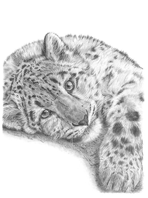 JUST CHILLIN' (young Snow Leopard) small print