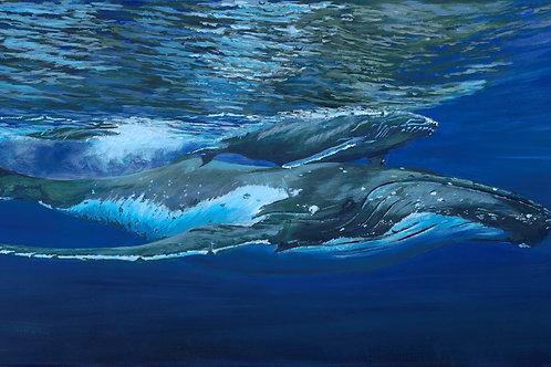 Mother and Calf humpback , Medium size print