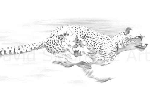 Lightspeed, Cheetah print