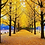 Thumbnail: Day tour: Nami Island, Petite France and The garden of morning calm