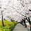 Thumbnail: Spring 4 days Seoul&Mt. Seorak Cherry blossom with Nami+Everland on 7 to 14 Apr