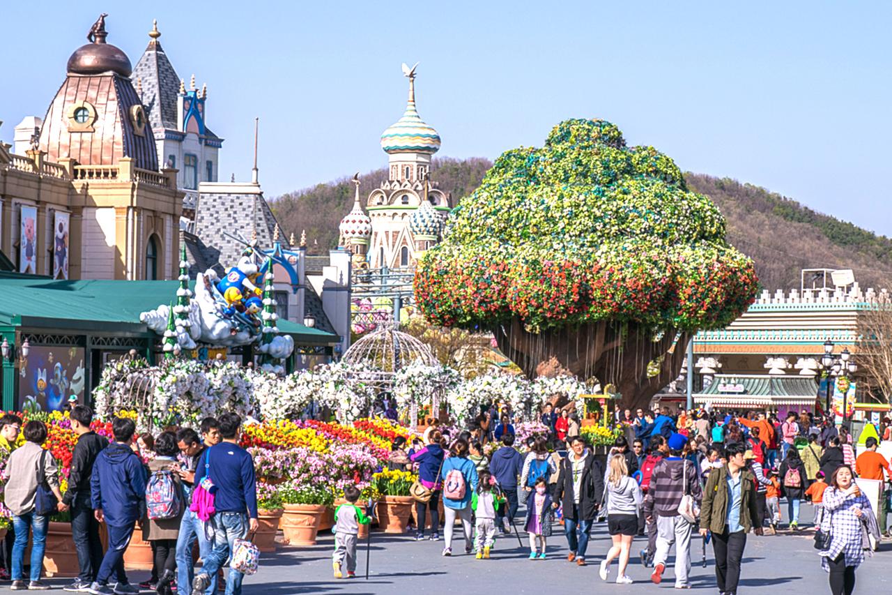 Everland Amusement Park Tree
