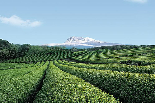 1 day Essential Jeju Island Private tour in West side with buffet
