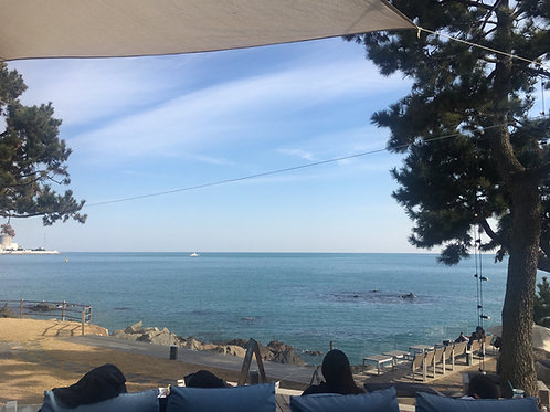 Busan Sightseeing tour with gorgeous cafes