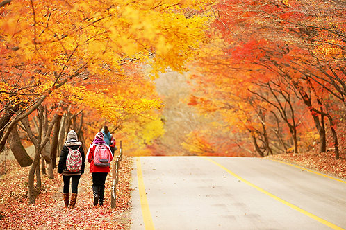 Autumn 3 days Jeonju+Mt. Naejansan+Seoul on 4-12 Nov