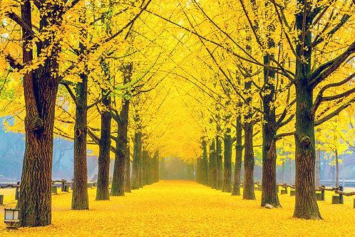 Autumn 3 days Mt. Seorak+Nami+Rail Bike+Seoul Tour on Mid to Late Oct