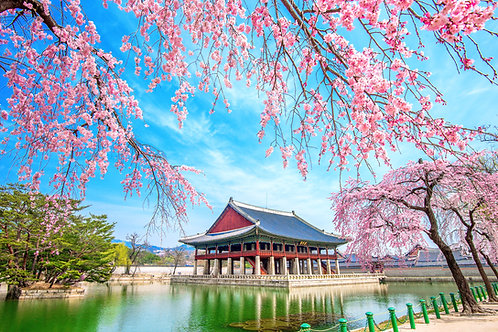 Full day Seoul & Gyeonggi Private Tour Service