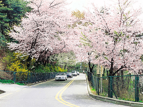 Spring 4 days Seoul&Mt. Seorak Cherry blossom with Nami+Everland on 7 to 14 Apr