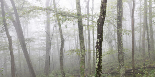 The Mist Panoramic (Virginia)