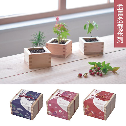 Seishin|盆景盆栽系列|櫻花|紅葉|黑松|日本