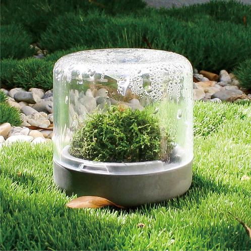 雨林瓶 Sanctuary-S 苔蘚盆景 自然生態瓶 家居種植 辦公室種植 澳洲設計