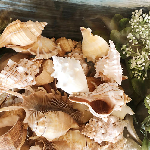 Assorted Shells - 5 for $10