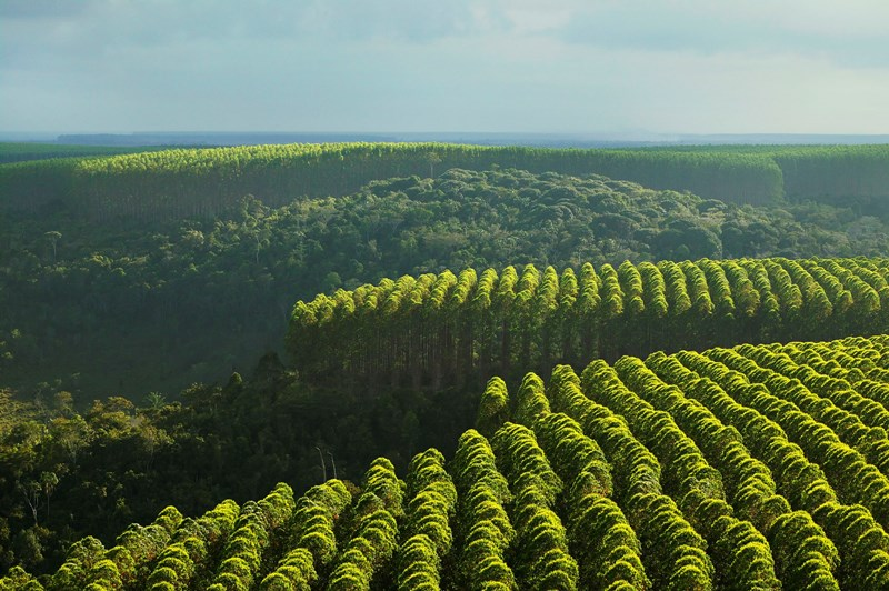 Assistência Técnica Florestal
