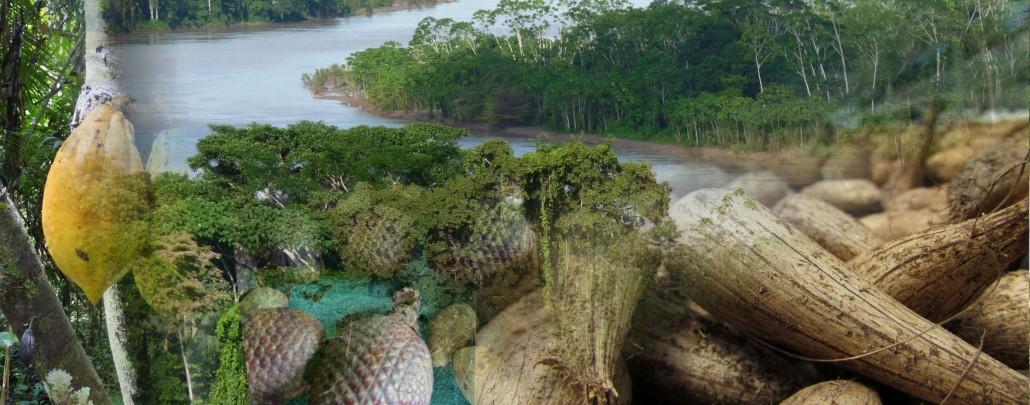 Consultoria em Produtos florestais