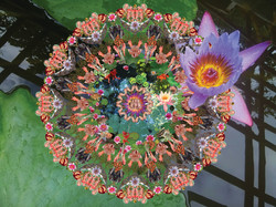 Infant Incarnation: At the Lotus Pon