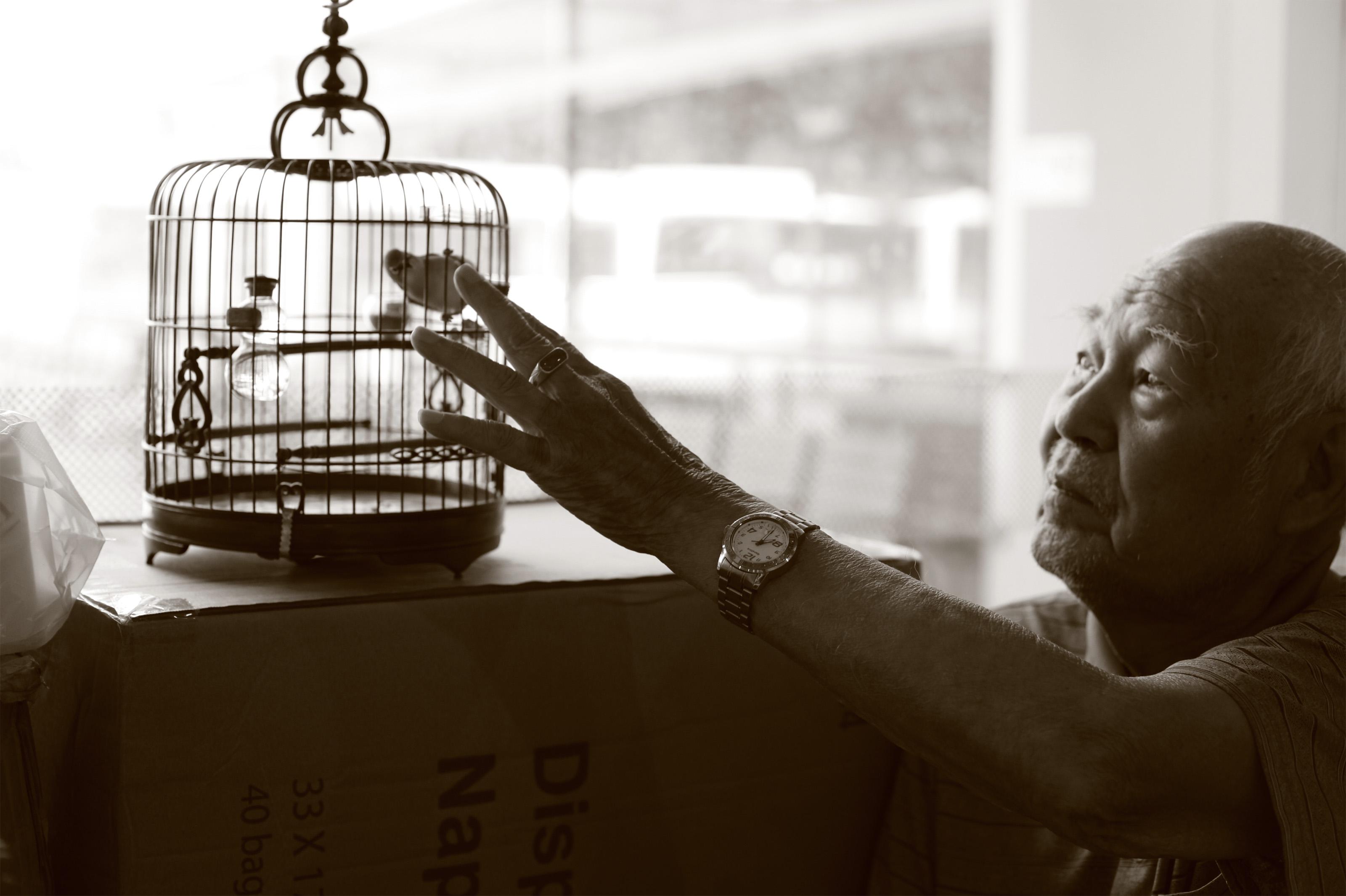 老先生和他的相思鸟