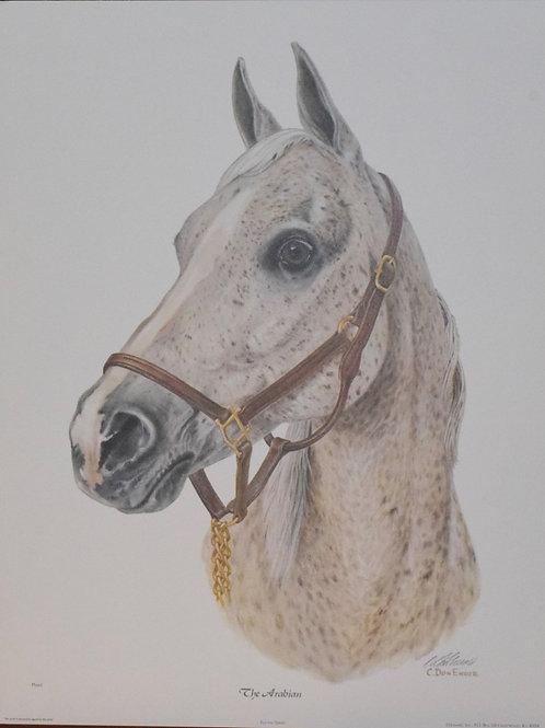 The Arabian