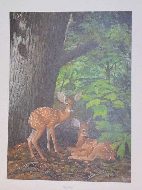 White Tail Fawns