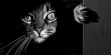 cat-black-and-white-photography-fb__700.