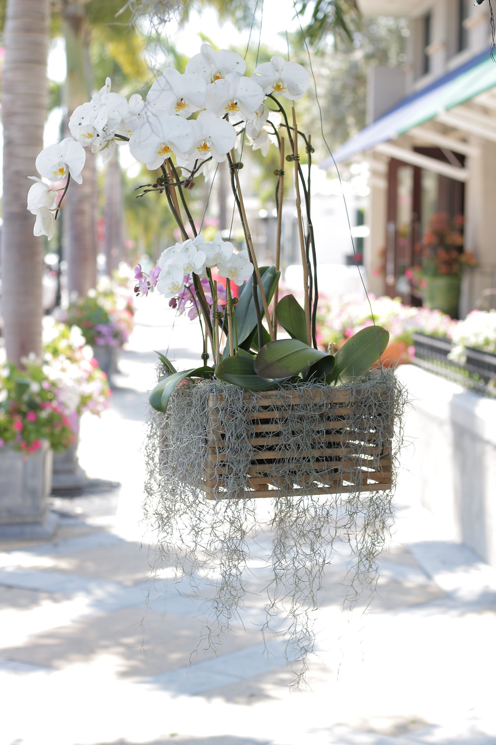 Wooden crate box containing Spanish moss hanging on the sides and a white orchid