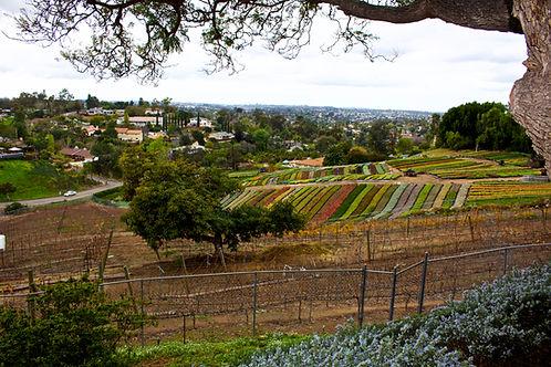 winery san diego