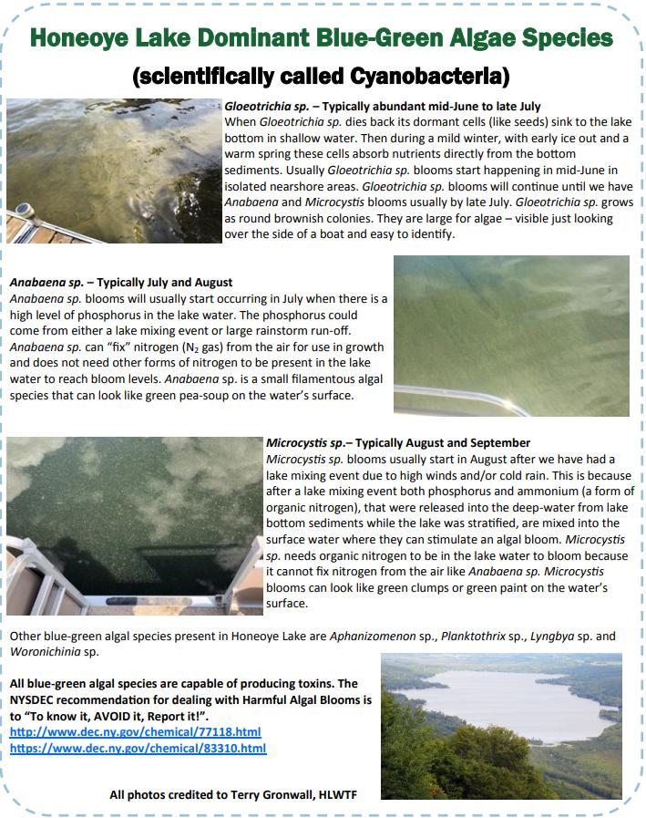 cyanobacteria.PNG