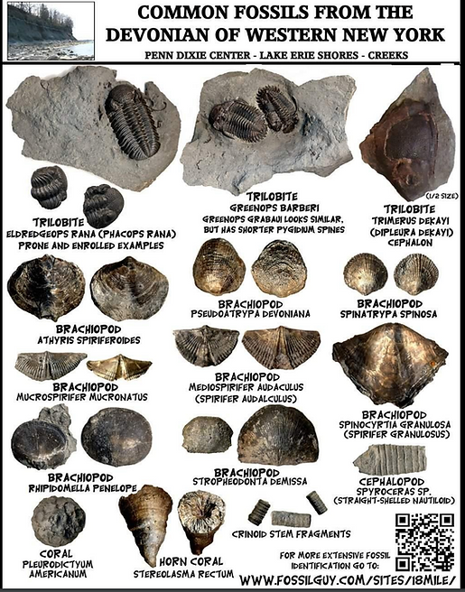 fossils.PNG