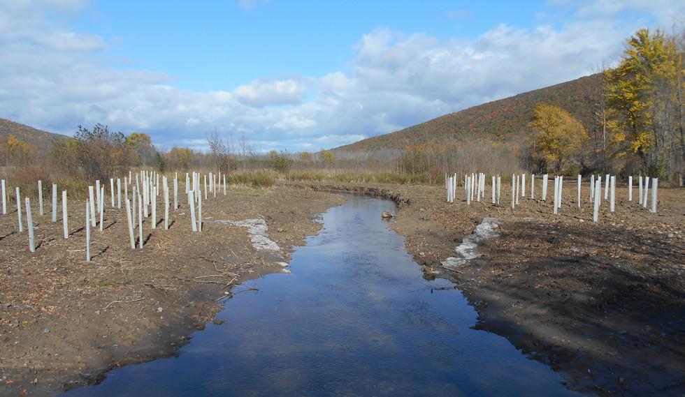 Inlet Planting