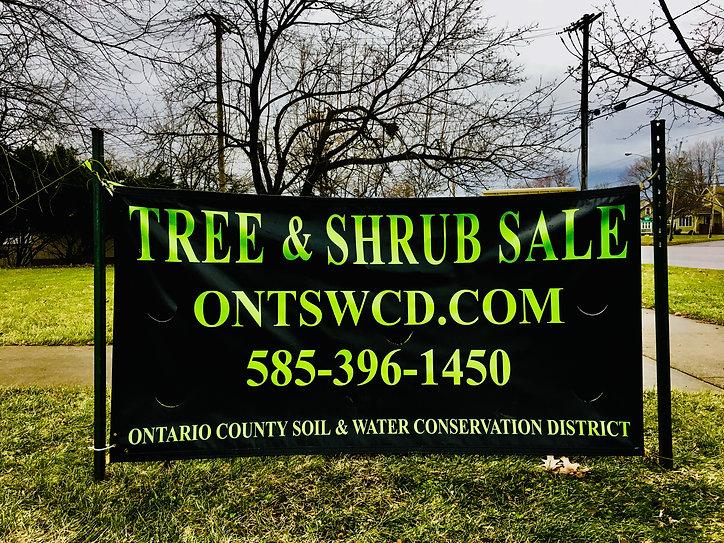 Tree and Shrub Sale Sign.JPG