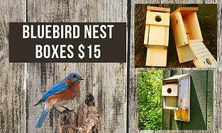 Bluebird nest box (1).png