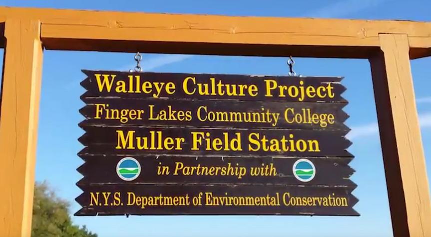 Walleye Culture Project