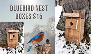 bluebird nest box.png