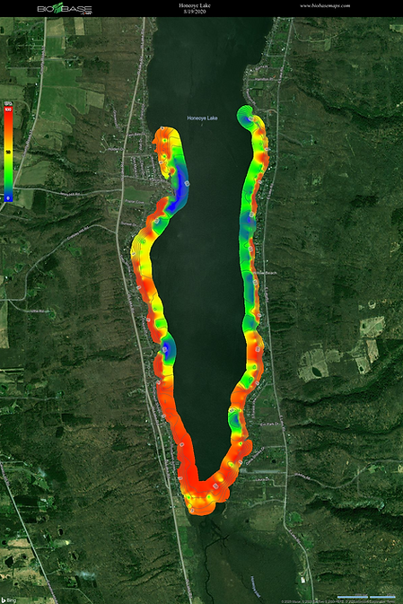 Honeoye Lake Southern Lake Basin Macroph