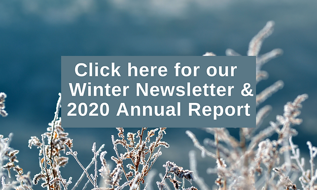 winter newsletter and annual report.png