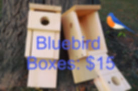 Bluebird Boxes through Ontario County SW