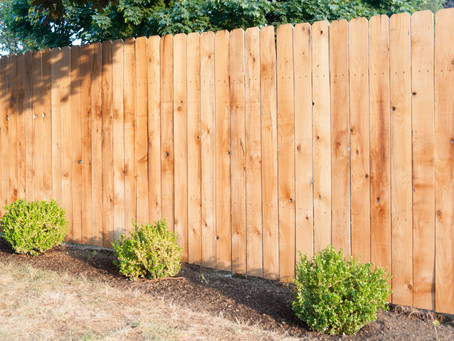Nice new fencing and lovely borders.